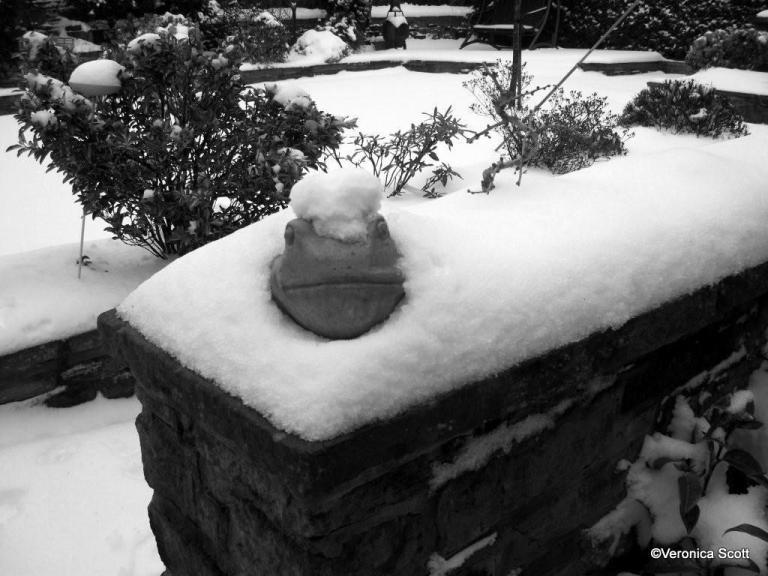 Snow Feb 2012 Frog
